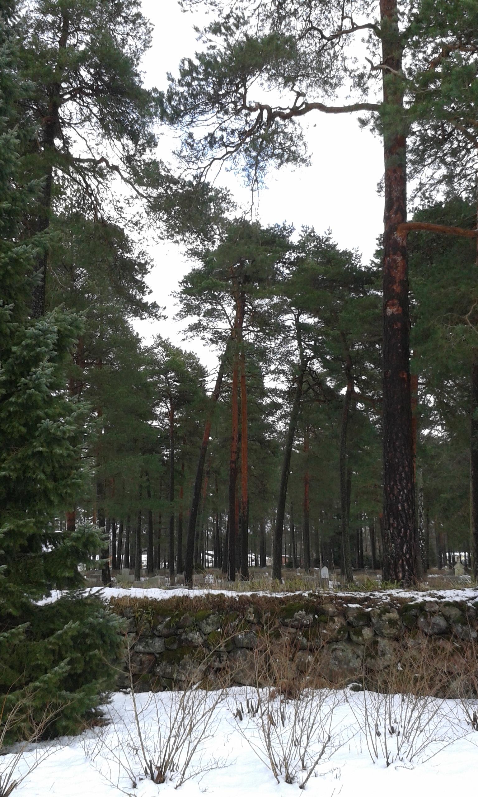 Skogskyrkogården i Skillingaryd